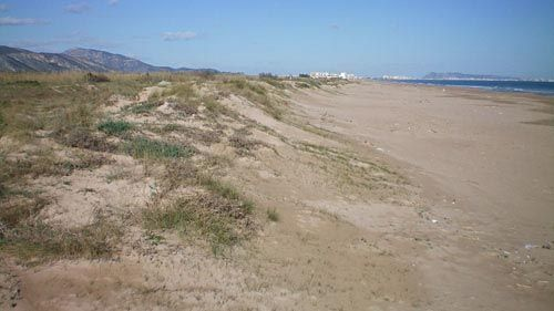 Gandia: la Playa de l'Ahuir