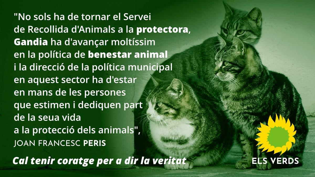Joan Francesc Peris, candidat a l'alcaldia per Els Verds anuncia que la recollida d'animals abandonats a Gandia tornarà a ser responsabilitat de les protectores